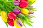 Выставка тюльпанов в Ботаническом саду