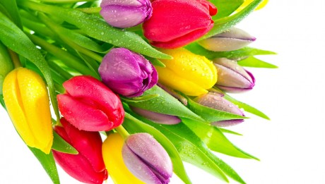 Nature_Flowers_Bouquet_of_multi-colored_tulips_036255_