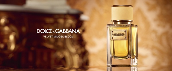 Dolce & Gabbana Mimosa Bloom
