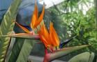 Выставка «Срезанные цветы со всего света»