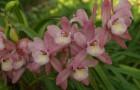 Дни орхидей